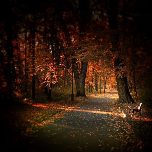 Landscape Lighting Highland Park: Mind Blowing Fall Photos For This Autumn